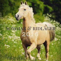 Nu går det att anmäla sig till lägersommaren 2016. Välkomna och tack till alla förhandsanmälda. Läs mer på hemsidan. #sommaren2016 #ridläger #ratsastusleiri #sadelkammaren #stalllångvik Tack, Horses, Animals, Animales, Animaux, Animal, Animais, Horse