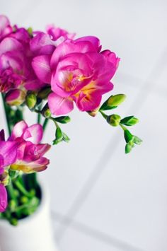 Flower of the Month: Freesia