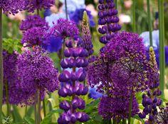 Purple Garden Bouquet | Flickr - Photo Sharing!