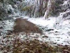 Hügellauf mit Schnee, schöner Pfad in der Aubinger Lohe - YouTube