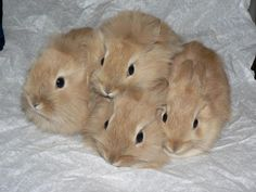 A bunch of baby bunnies!
