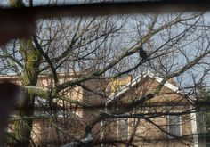 The Small Gems: When the Same Bird Serenades You at Your Window Ea...