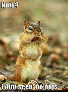 reminds me of the hamsters:) Hamsters, Vida Animal, Mundo Animal, Baby Animals, Funny Animals, Cute Animals, Animal Memes, Animal Humor, Animal Quotes