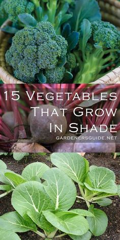 Plant These 15 Delicious Vegetables That Can Grow Without Full Sun - Gardeners' . - Plant These 15 Delicious Vegetables That Can Grow Without Full Sun – Gardeners' Guide - Backyard Vegetable Gardens, Container Gardening Vegetables, Veg Garden, Vegetable Garden Design, Edible Garden, Garden Compost, Allotment Gardening, Vegetables Garden, Easy Grow Vegetables