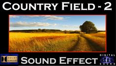 Country Field Sound Effect   COUNTRY FIELD SFX - 2   HD
