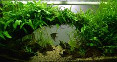 Planted Tank Underpass by M French - Aquascape Awards