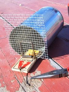 chipmunk trap - had these when I was a kid.