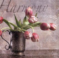 Dutch Tulips II by Gaetano  art print
