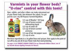 Make thumper go home Garden Weeds, Garden Of Eden, Garden Plants, Organic Gardening, Gardening Tips, Mole Removal, Landscape Structure, Garden Yard Ideas, Mini Farm