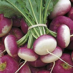 Organic Turnip Milan Purple Top