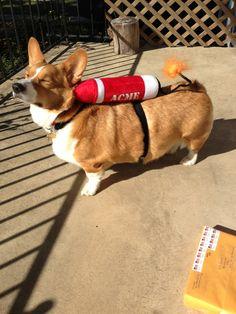 Rocket #Corgi. BAAAHAHAHAHAHAHAAAA!!!! I need this for Gabi!