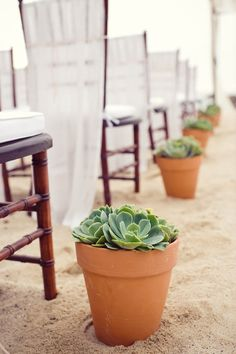 potted succulents lining the aisle of this beach wedding. the gauzy chair covers are pretty awesome too  Photography by klkphotography.com, Event Coordination, Floral and Event Design by thedazzlingdetails.com