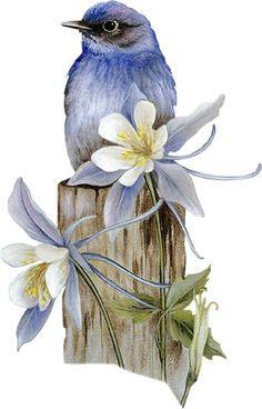 Birds tubes Plus Watercolor Bird, Watercolor Paintings, Bird Illustration, China Painting, Bird Drawings, Bird Pictures, Vintage Birds, Bird Prints, Bird Art