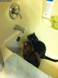 This reminds me of my cat Fatty..hes always in the tub waiting for the water to come out LOL @Carolyn Jackson