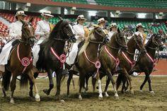 Asociación Nacional de Caballo de Paso Peruano