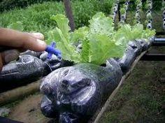 Manual de Cultivos Hidropónicos                              …