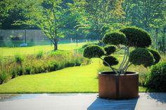 Garden by Jan Joris Tuinarchitectuur #cortenstaal #cortensteel #planter #bonsai #solitair #bloembak Focal Points, Terrace Design, Bonsai, Planters, Garden, Bonsai Trees, Garten, Bonsai Plants, Planter Boxes