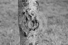 Tree trunks can show many textures