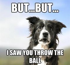 Us #tricky humans and our #ball #throwing #magic.