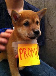 This may be the best way to be asked to prom!! A puppy from the shelter!