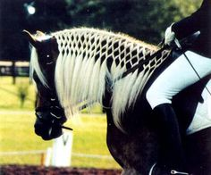 love this for a show when the mane is just too georgous to pull for standard braids