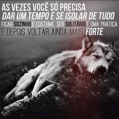 327 Melhores Imagens De Lobos Wolf Pictures White Wolf E Wolves