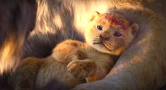 MUSİC&CINEMA - The first trailer came from Disney's classic animation The Lion King, which he has rewritten using real creatures. In the nineties, although Disney had Lion King Remake, Watch The Lion King, Lion King Movie, Lion King Art, Disney Lion King, Simba Und Nala, Simba Lion, Disney Pixar, Disney And Dreamworks