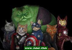Avenger Katzen