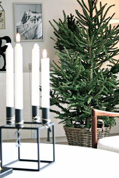 studio karin. My former home, last christmas. Christmas tree in a basket.