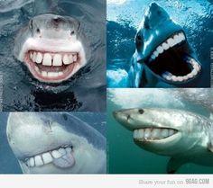 If sharks had people teeth. LOL