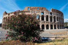 Colosseum. Rome, Italy.