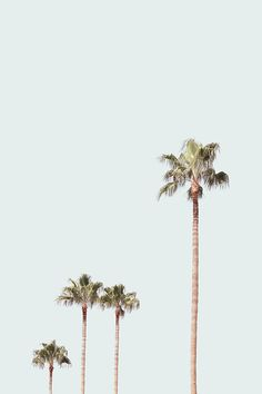 Ideas palm tree aesthetic vintage for 2019 Collage Mural, Bedroom Wall Collage, Photo Wall Collage, Collages, Aesthetic Collage, White Aesthetic, Aesthetic Vintage, Aesthetic Painting, Aesthetic Grunge