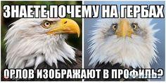 Почему орлов изображают на гербах в профиль?