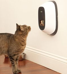 Video Chat And Dispense Treats To Your Pets Remotely.for the treats, not the video chat. Crazy Cat Lady, Crazy Cats, Game Mode, Pet Camera, Video Chat, Gato Gif, Cool Technology, Four Legged, Cool Gadgets