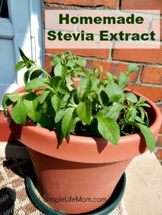 Homemade Stevia Extract - Simple Life MomSimple Life MomHomemade Stevia Extract…
