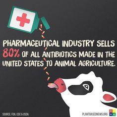 Antibiotics in Animal Agriculture Vegan Facts, Vegan Memes, Vegan Quotes, Why Vegan, Vegan Vegetarian, Animal Agriculture, Vegan Animals, Think, Vegan Lifestyle