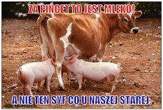 Reakcje internautów na Program KrowaPlus i ŚwiniaPlus - najlepsze memy – Demotywatory.pl