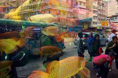 At Goldfish Market In Mongkok Hong Kong