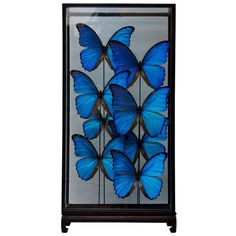 Large Butterfly Showcase | From a unique collection of antique and modern taxidermy at http://www.1stdibs.com/furniture/more-furniture-collectibles/taxidermy/