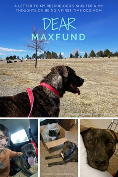 SIX months with our pup & we couldn't be happier - a letter to Maxfund & my thoughts as a first time dog-mom!