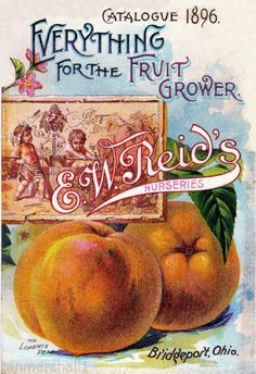 1896 Reid's Peach Vintage Flowers Seed Packet Catalogue Advertisement Poster | eBay