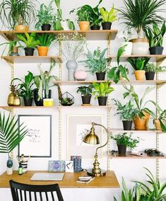 Plankjes met planten - Makeover.nl