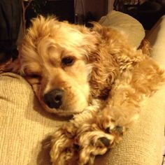My love....Cutest doggy ever! :)