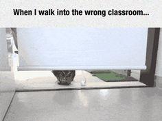 funny-gif-owl-walking-class
