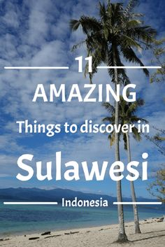 Thinking of going to Sulawesi soon? You should! Sulawesi has a lot to offer to adventurous travelers. From diving to meeting with remote tribes in the jungle, I tell you all about it in this article. #travel #adventure #Indonesia