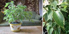 Pestujete niektorú z nich aj vy? Planter Pots, Garden, House, Garten, Haus, Gardening, Outdoor, Homes, Home Landscaping