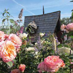 Hexen(garten)häuschen für alle - echt schräg!   #Exterieur #Extravagant #Gartenhaus #Lieblingsplatz Floral Wreath, Wreaths, Home Decor, Wooden Cottage, Witches, Classic, Homes, Homemade Home Decor, Door Wreaths