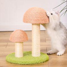 Mushroom Shaped Cat Climbing Frame Cat Trees Cheap, Cat Climbing Tree, Cat Water Fountain, Cat Bath, Online Pet Store, Cat Towers, Cat Drinking, Cool Cats, Stuffed Mushrooms