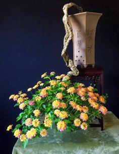 Flowering Bonsai & some other Good News | Bonsai Bark