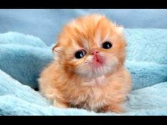 Funny Cute Baby Animal Videos Compilation 2014 [NEW] - YouTube
